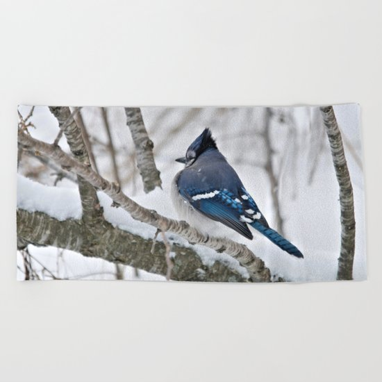 Winter's Cold (American Blue Jay) Beach Towel