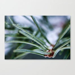 Pine Out Canvas Print