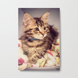Tabby kitten in vintage colours Metal Print