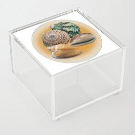 Four Seashells on Orange Frost Acrylic Box