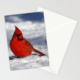 Male Northern Cardinal in the Snow Stationery Cards