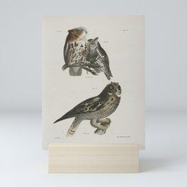 1278 25 26 The Little Screech Owl (Bubo asio) 27 The Short eared Owl (Otus palustris)26 Mini Art Print