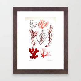 Algae Study I Framed Art Print
