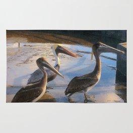 Three Begging Pelicans Rug