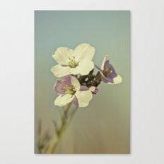 Cuckoo Flower 2 Canvas Print