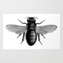 Bee Posh Art Print