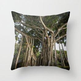 Banyan Tree at Bonnet House Throw Pillow