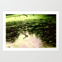 Water in the Wetlands Art Print