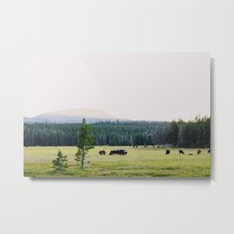 Cows in the Mountains Metal Print