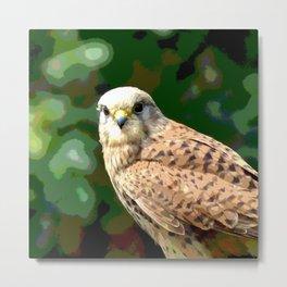 Falcon kestrel Metal Print