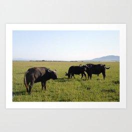 African Buffaloes Art Print