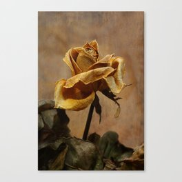 The last yellow autumn rose Canvas Print