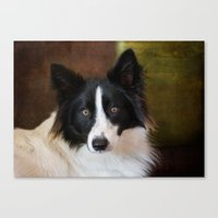 border collie Canvas Prints featuring Border Collie by lifeandthat photography