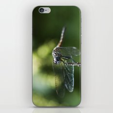 Fly, Dragon, Fly iPhone & iPod Skin