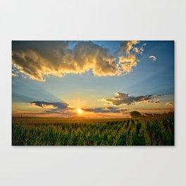 Iowa Corn Fields Canvas Print