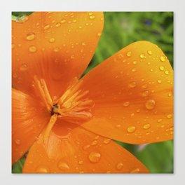 california poppy V Canvas Print