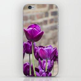 Purple tulips 2 iPhone Skin