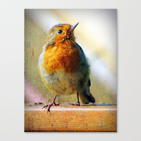 Robin Red Breast Canvas Print