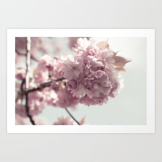 Spring's arrival: Cherry blossoms Art Print
