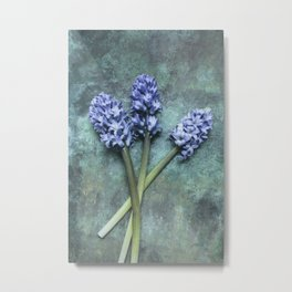 Beautiful Hyacinth Metal Print