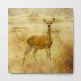 Female Red Deer Metal Print