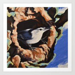 White Breasted Nuthatch Art Print