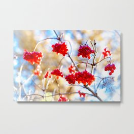 Arrowwood Berries Metal Print