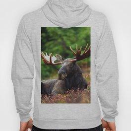 Relax Moose Hoody