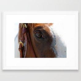 The Eye and the Horse Framed Art Print