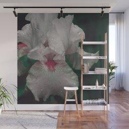Iris No.1v by Kathy Morton Stanion Wall Mural