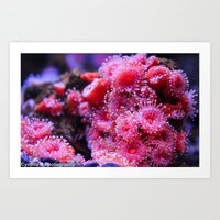 Pink in the Sea Art Print