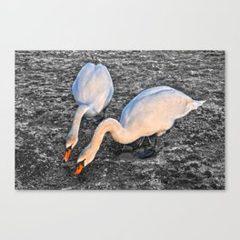 Found Some! Canvas Print
