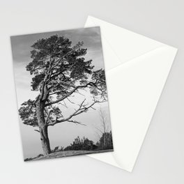 Lonely pine on a hill Stationery Cards