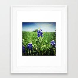 Texas Bluebonnet Flowers Framed Art Print