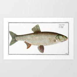 Aspius (Cyprinus Aspius) from Ichtylogie ou Histoire naturelle generale et particuliere des poissons Art Print