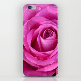 Pink rose close up with raindrops iPhone Skin