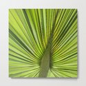 Green Palm Leaf Tropical Plant by lebensartphotography
