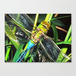 Blue Dragonfly Wings Canvas Print