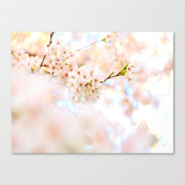 White Floral Photo White Cherry Blossoms Blurred Soft Feminine Art Canvas Print