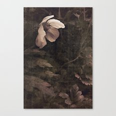 butterfly anemone Canvas Print