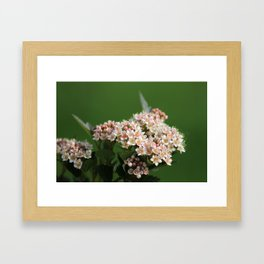 Summer Blooms Framed Art Print