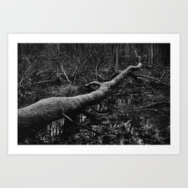 Forest - Kampinoski National Park Art Print