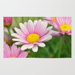 Daisy pink 090 Rug
