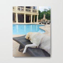 Doggy Daze Metal Print