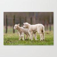 lamb Canvas Prints featuring lamb by Marcel Derweduwen