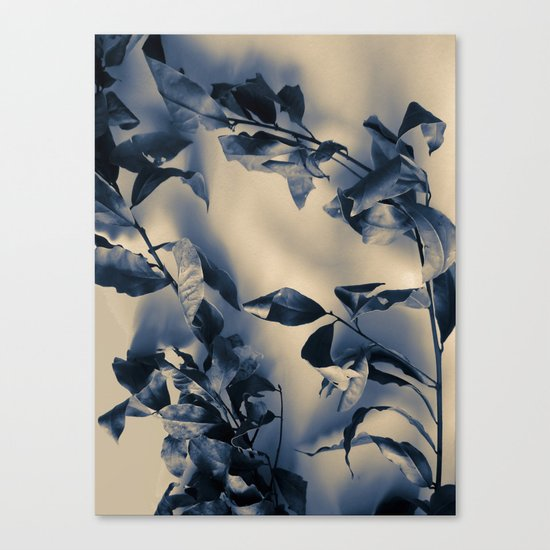 Bay leaves Canvas Print