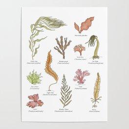 Seaweeds Poster