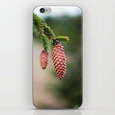 Baby Pine Cones iPhone & iPod Skin
