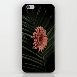 Tropical gerbera iPhone Skin