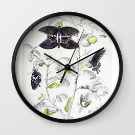 Lifecycle of Common Mormon Butterfly Wall Clock